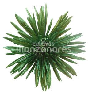 Ananstasia metalic xmas green glitter