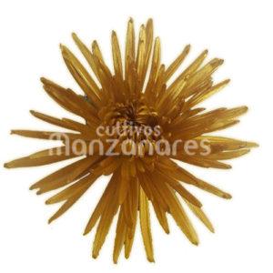 anastasia yellow metallic