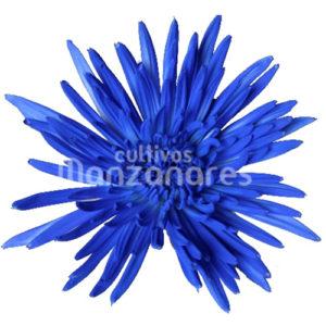 anastastasia gark blue