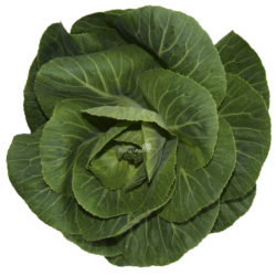 braqssica green