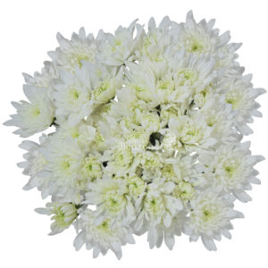 cuhsion white