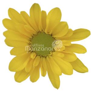 daisy yellow natural