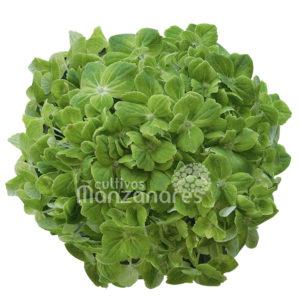 esmeradla green