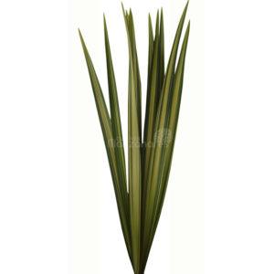 flax variegado