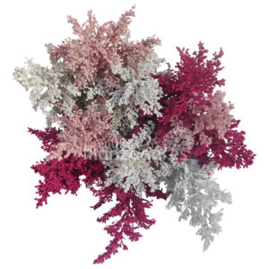 pink white hot pink solidago